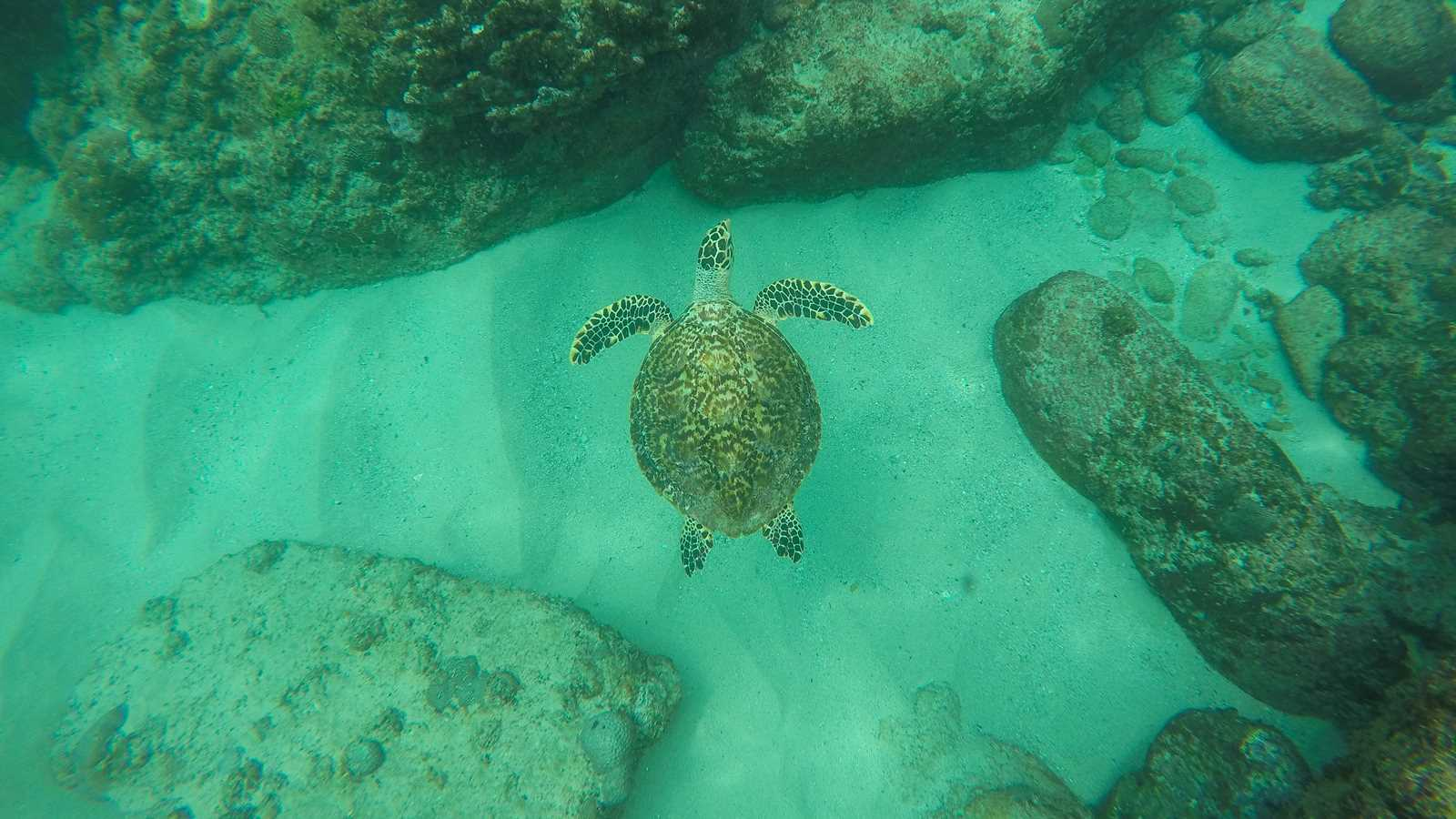 Snorkeling with turtle in Seychelles