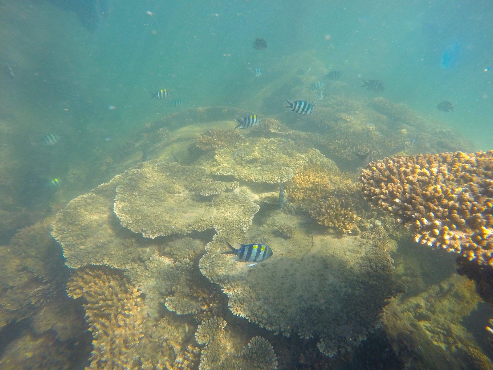 Snorkeling Moreton Island Australia
