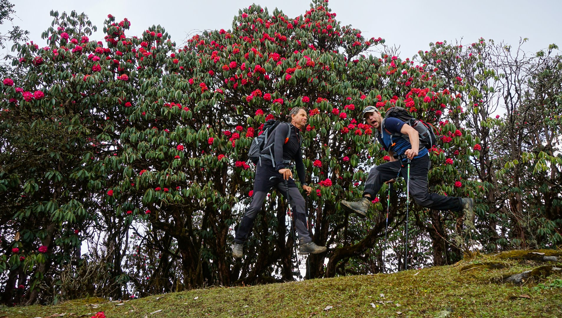 Rhododendron flowers and us having some fun