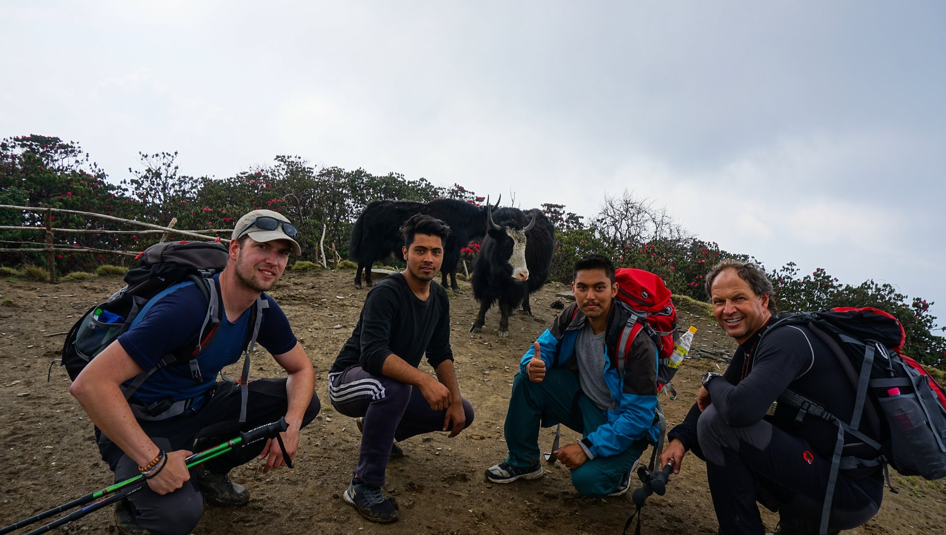 Yak farm, Mardi Himal base camp trek in Nepal