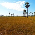 Typical land of Cambodia