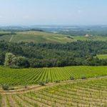 Barone Ricasoli winery landscape