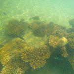 Ship wrecks Tangalooma Island resort